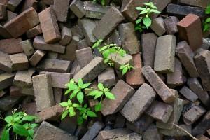 brick-1511232_1280